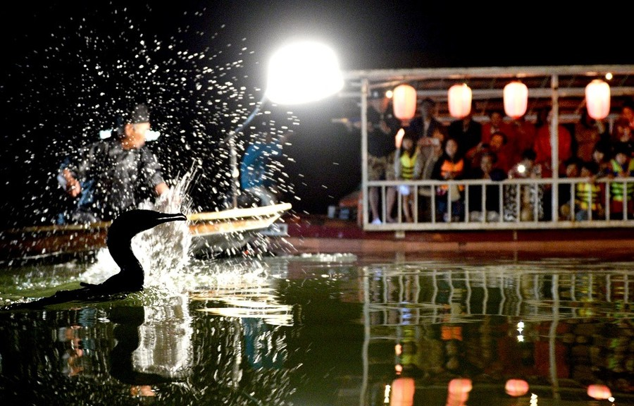 福冈县原鹤温泉将再次举办鸬鹚捕鱼活动