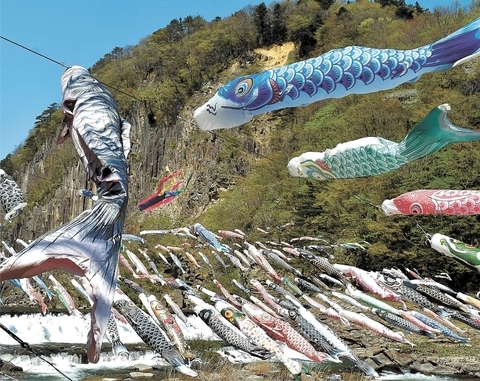 为祈祷灾后复兴 宫城县白石川上空800个鲤鱼旗迎风飘舞