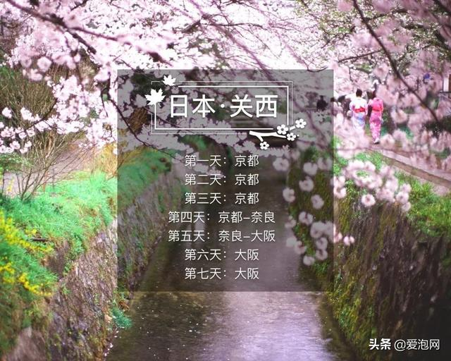 今年1月到5月 来日本看樱花全线攻略!
