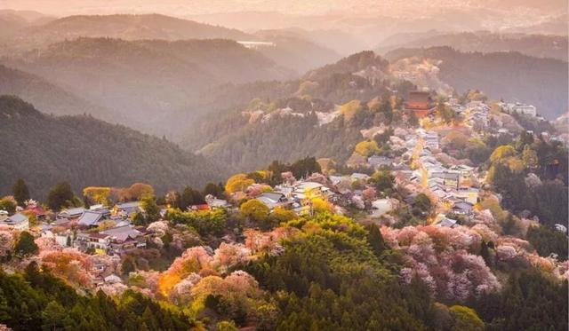 如约在花见︱一年只等这一期,去感受日本的浪漫樱花情怀!
