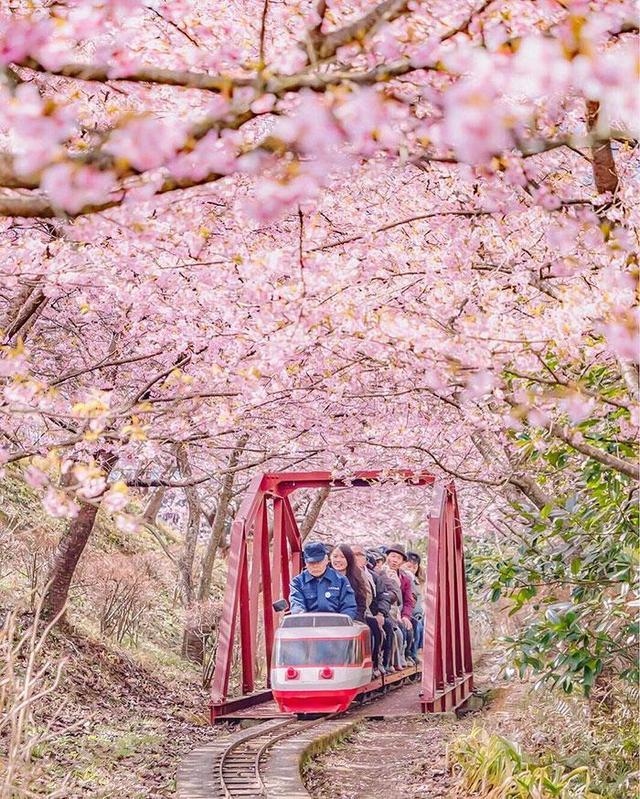 """日本70%的民众患有花粉症!花粉症为什么成了日本的""""国民病""""?"""