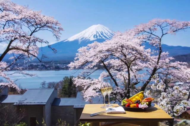 这个樱花旺季,手握100间日本民宿的人却惨淡到谷底