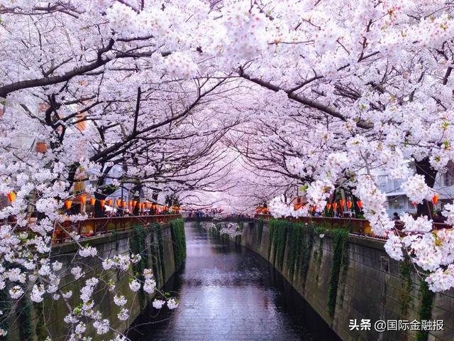 """日本""""樱花经济""""惨淡,旅游业收入下降九成,安倍将宣布史上最大刺激措施 ..."""