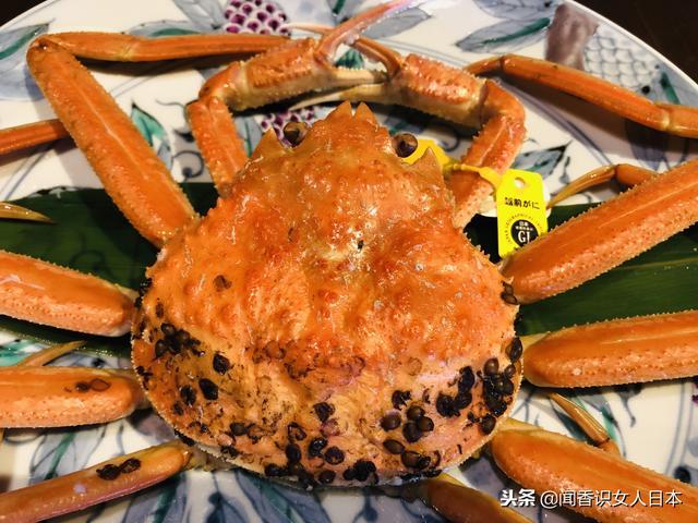 日本福井县不仅存款最多还有最贵的越前螃蟹