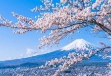 陣馬--高尾纵走 樱花和富士山绝景徒步旅行
