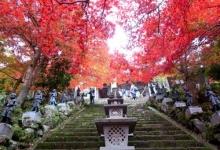 登山+紅葉+寺庙 心が落ち着く秋を楽しむ 12/1